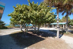 Gulf Shores Realty: 1535530093